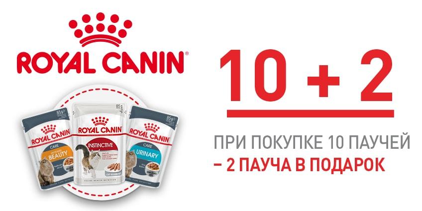 10 + 2 в ПОДАРОК!