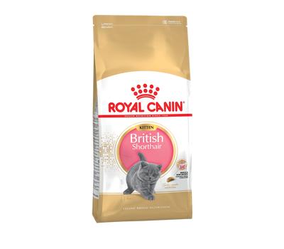 Роял Канин для котят британской короткошерстной